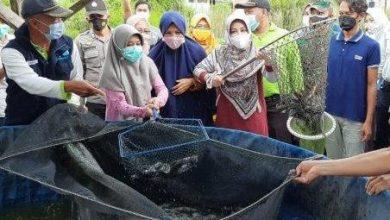 Photo of Bupati Berau Panen Raya Ikan Lele